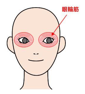 眼輪筋を説明する絵